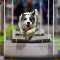In Pictures: Jumping dogs and dapper parrots among stars at National Pet Show