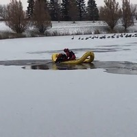 Watch: Dog rescued after falling through ice into frozen lake