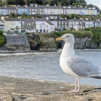 Take on Nature: Regarding our relationship with seagulls, context is everything