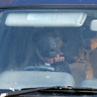 Scientists develop sensor to save children and pets left in vehicles