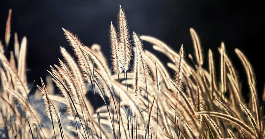 Casual Gardener: Enjoy a bit of rough over the winter - The Irish News