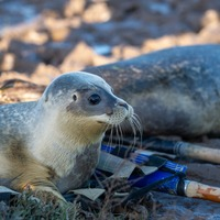 Six seals released back into the wild