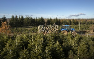 In Video: Christmas tree harvest begins at Yorkshire plantation