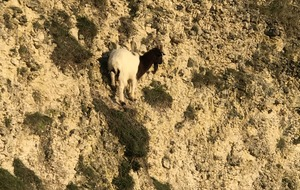 Hapless goat rescued from tiny ledge 60 feet up a cliff
