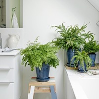 Casual Gardener: How to make your houseplants feel at home