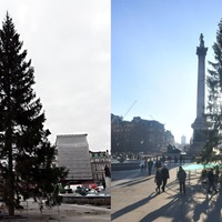 Trafalgar Square Christmas tree labelled 'anaemic' and 'thin'