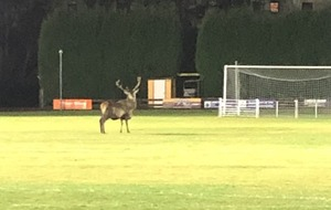 Stags on pitch halt training for Scottish football team