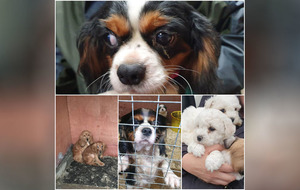 31 dogs rescued and two men arrested in Mid Ulster illegal breeding investigation