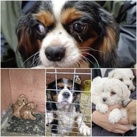 Puppies rescued by police