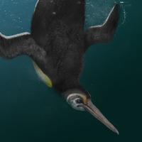 Ancient penguin 'bridged gap between extinct giant penguin and modern relatives'