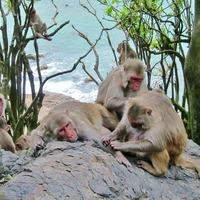 BFFs: Close friends help macaques survive