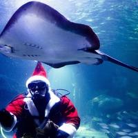 Swimming Santa feeds the fish at Berlin aquarium