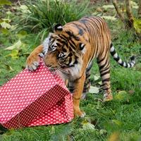 Animals enjoy Christmas treats at London Zoo