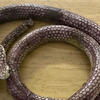 'Venomous snake' abandoned on bin revealed to be rubber toy