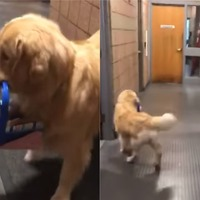Watch as police therapy dog caught stealing donated Christmas toys