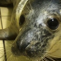Rescued seal pups released back into the wild