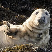 Strangford proves to be perfect seal nursery as lough sees record births