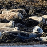 Co Kerry fishermen demand cull of seal population as 'thousands' continue to make fishing 'unsustainable'