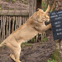 In Pictures: Chalk another one up: London Zoo launches animal audit
