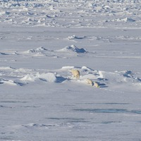 Watch five-week-old polar bear cub take tentative baby steps at zoo