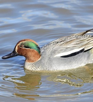 Stephen Colton's Take on Nature: A spring of teal at a time of revelation