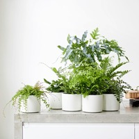 The Casual Gardener: Ancient ferns are just the ticket if it's exoticism you're after