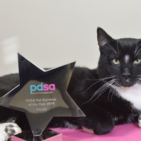 'Miracle kitten' wins PDSA Pet Survivor of the Year Award