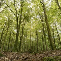 New virtual tours to teach children about forests