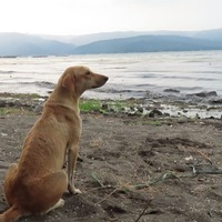 Dog comes 'running through the ash' to be rescued from volcano island
