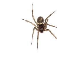 Ask the GP: A spider bit me in bed – now that's creepy