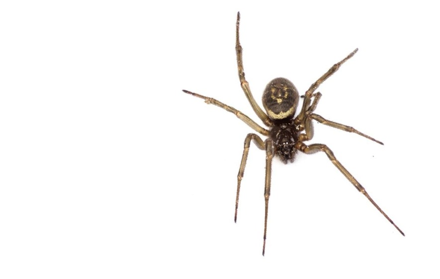 Ask The Gp A Spider Bit Me In Bed Now That S Creepy The Irish News