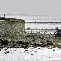 Woman dies after car comes off road along the shores of Strangford Lough