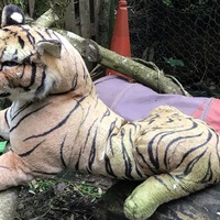 'Caged tiger' among RSPCA's strangest calls of 2019