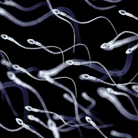 Men should be able to donate sperm after death, as with organ donation, say scientists