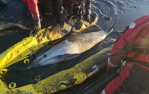 Dolphins stuck in the mud saved by firefighters
