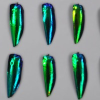 Scientists discover how iridescent jewel beetles 'hide in plain sight'