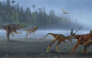 'Remarkable' new dinosaur species officially recognised after 30 years