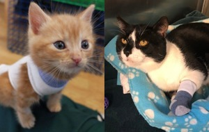 RSPCA hospital asks volunteers to donate baby socks for recovering animals