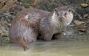Court hears claims otter activity at Craigavon lake could be harmed by building £45m Southern Regional College