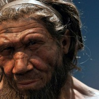 Africans and Europeans 'have more Neanderthal ancestry than previously thought'