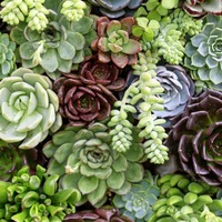 Gardening advice: How to create a gorgeous succulent display in pots on the patio