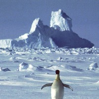 Antarctica appears to have broken heat record