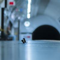 Mice 'squabbling' on Tube station platform wins wildlife photography award