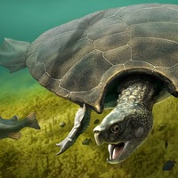 Giant extinct turtle's horned shell may have been used for combat, experts say