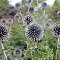The Casual Gardener: Seven gardening jobs to do before spring has sprung