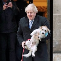 Surge in popularity for native dog breeds in build-up to Brexit