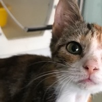 Kitten rescued during storm named Ciara
