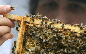 From beef bans to beekeeping: Universities share plans to combat climate change