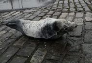 Car park rescue seal released back into the wild