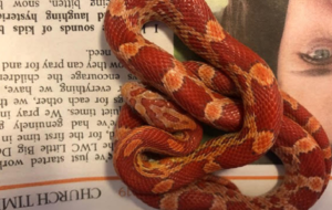 Escaped pet snake found in London airing cupboard
